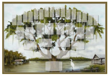 Arbre illustré 5 générations Chêne de Virginie
