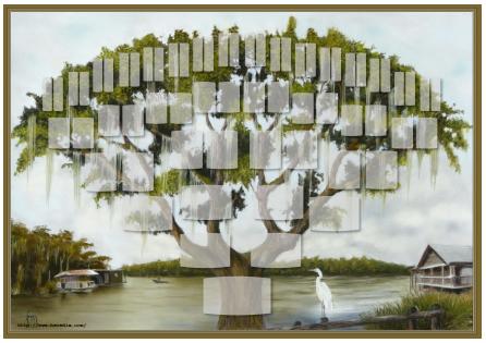 Arbre illustré 6 générations Chêne de Virginie