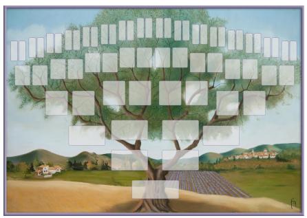 Arbre illustré 6 générations Olivier